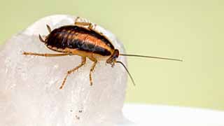 What Do Roaches Hate